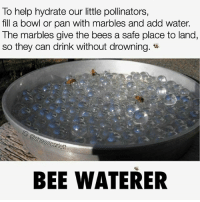 Memes, Help, and Water: To help hydrate our little pollinators,  fill a bowl or pan with marbles and add water.  The marbles give the bees a safe place to land,  so they can drink without drowning.  nes Scarlett  BEE WATERER @Regrann from @awakeningthemasses - savethebees regrann