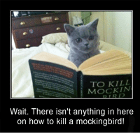 To Kill a Mockingbird: TO KILL  DTR  Wait. There isn't anything in here  on how to kill a mockingbird!
