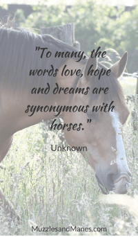 "Horses, Love, and Dreams: To many, the  Words love, hope  and dreams are  synonymout with  horses.""  Unknown  MuzzlesandManes.com ""To many, the words love, hope and dreams are synonymous with horses"" - Author Unknown"