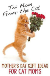 Cute, Memes, and Moms: To: Mom  From: the  MOTHER'S DAY GIFT IDEAS  FOR CAT MOMS For more cute pics LIKE us at The Purrfect Feline Page