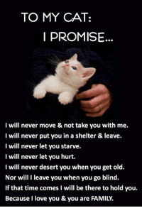 I promise...: TO MY CAT:  PROMISE  I will never move & not take you with me.  I will never put you in a shelter & leave.  I will never let you starve.  I will never let you hurt.  I will never desert you when you get old.  Nor will I leave you when you go blind.  If that time comes I will be there to hold you.  Because I love you & you are FAMILY. I promise...