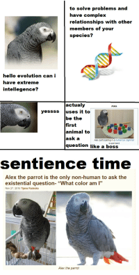 "fren! :): to solve problems and  have complex  relationships with other  members of your  species?  hello evolution can i  have extreme  intellegence?  actualy  Alex  yessss uses it to  be the  first  animal to  ask a  question like a boss  Alex participating in a numerical cognition  experiment  sentience time  Alex the parrot is the only non-human to ask the  existential question- ""What color am ""  Nov 27, 2016 Tijana Radeska  Alex the parrot fren! :)"