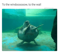 @hilarious.ted is my favorite animal memes page: To the windoooooow, to the wall  hilarious ted @hilarious.ted is my favorite animal memes page
