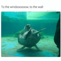 Memes, Ted, and Hilarious: To the windoooooow, to the wall  hilarious ted It's the freakin' weekend baby. repost via @hilarious.ted