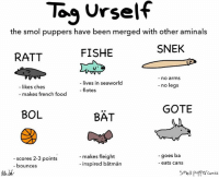 tag urself im snek: To Urself  the smol puppers have been merged with other aminals  SNEK  FISHE  RATT  no arms  lives in seaworld  no legs  likes ches  flotes  makes french food  GOTE  BOL  BAT  goes ba  makes fleight  scores 2-3 points  inspired batman  eats cans  bounces  Smoll Puffer Comics tag urself im snek