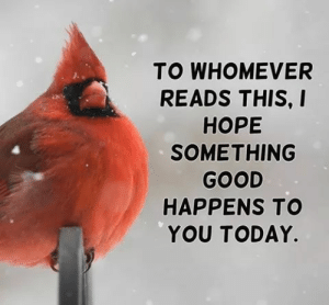 Just in case you need a bird friend.: TO WHOMEVER  READS THIS, I  НОРЕ  SOMETHING  GOOD  HAPPENS TO  YOU TODAY. Just in case you need a bird friend.