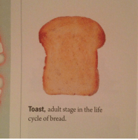 """Life, Target, and Tumblr: Toast, adult stage in the life  cycle of bread. <p><a class=""""tumblr_blog"""" href=""""http://rhyse.ca/post/74712899822/behold-the-american-education-system"""" target=""""_blank"""">pizzaforpresident</a>:</p>  <blockquote> <p>Behold the American education system</p> </blockquote>"""
