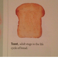 Burn him.: Toast, adult stage in the life  cycle of bread Burn him.