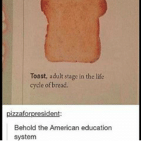 I won't have wifi until tomorrow after school: Toast, adult stage in the life  cycle of bread  pizzafor president:  Behold the American education  system I won't have wifi until tomorrow after school