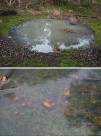 News, Target, and Tumblr: toastoat: plantparenthood:   photogenic-falcon: I came across this very odd pond in a forest thats a vernal pool baby!!! alllll the salamanders are gonna spawn in that    Fantastic news thank you