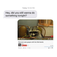 Amazing: Today 10:44 PM  Hey, did you still wanna do  something tonight?  Raccoon eats grapes with his little hands  NKI  Add to Share More  11,727 Amazing