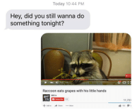 Raccoon, Today, and Add: Today 10:44 PM  Hey, did you still wanna do  something tonight?  4)  035 / 109  Raccoon eats grapes with his little hands  MKI tv  Subscribe  122  11,727  +Add to  → Share  102タ11  More