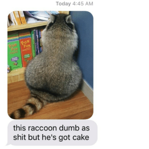 Dumb, Shit, and Cake: Today 4:45 AM  FUN  rtash  Flash  Cards  this raccoon dumb as  shit but he's got cake