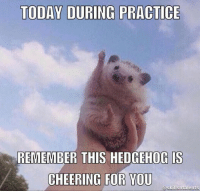 Tumblr, Hedgehog, and Http: TODAY DURING PRACTICE  REMEMBER  THIS HEDGEHOG IS  CHEERING FOR YOU  @skillsntalents @studentlifeproblems