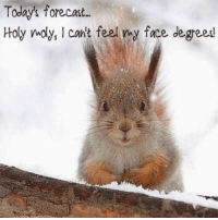 For more fun and holiday pictures, stop by my new picture web site..click link below www.snowflakescottage.com: Today forecast.  Holy moly, l cant feel my face degreesl For more fun and holiday pictures, stop by my new picture web site..click link below www.snowflakescottage.com