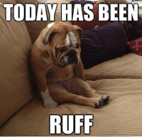 Hang in there! It's almost Friday!: TODAY HAS BEEN  RUFF Hang in there! It's almost Friday!
