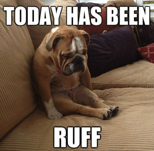 Hilarious And Adorable Dog Memes Guaranteed To Put You In A Good ...: TODAY HAS BEEN  RUFF Hilarious And Adorable Dog Memes Guaranteed To Put You In A Good ...