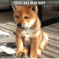 "Memes, 🤖, and  Ruff: TODAY HAS BEEN RUFF  IGotyatyamarukazokb Don't let one ""ruff"" day turn your week upside down! :("