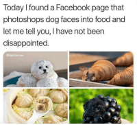 Dog Faces: Today I found a Facebook page that  photoshops dog faces into food and  let me tell you, I have not been  disappointed  @Bestmemes