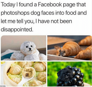 Dog Faces: Today I found a Facebook page that  photoshops dog faces into food and  let me tell you, I have not been  disappointed.  08398/