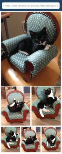 Memes, Today, and Chair: Today, I found a kitten sized chair and, luckily, I had a kiten to put in