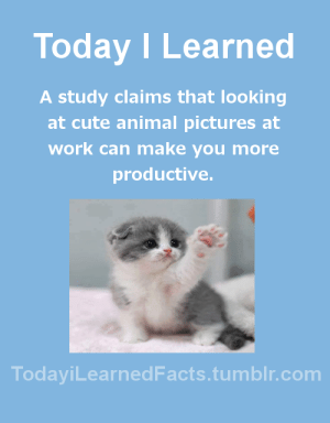 Cute, Facts, and Tumblr: Today I Learned  A study claims that looking  at cute animal pictures at  work can make you more  productive.  TodaviLearned Facts.tumblr.com todayilearnedfacts:  Follow TodayiLearnedFacts for more Daily Facts!Source