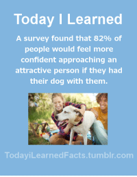 todayilearnedfacts:  Follow TodayiLearnedFacts for more Daily Facts!Source: Today I Learned  A survey found that 82% of  people would feel more  confident approaching an  attractive person if they had  their dog with them.  TodaviLearned Facts.tumblr.com todayilearnedfacts:  Follow TodayiLearnedFacts for more Daily Facts!Source
