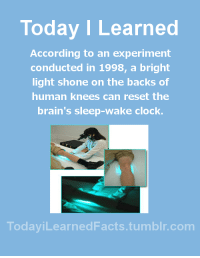 Brains, Clock, and Facts: Today I Learned  According to an experiment  conducted in 1998, a bright  light shone on the backs of  human knees can reset the  brain's sleep-wake clock.  TodaviLearned Facts.tumblr.com todayilearnedfacts: Follow TodayiLearnedFacts for more Daily Facts! Source