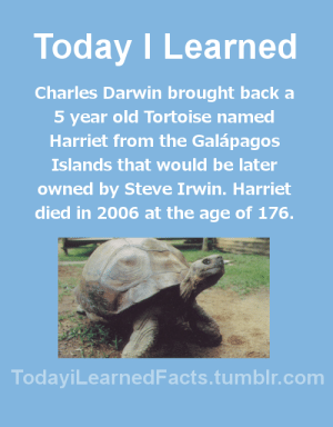 Facts, News, and Steve Irwin: Today I Learned  Charles Darwin brought back a  5 year old Tortoise named  Harriet from the Galápagos  Islands that would be later  owned by Steve Irwin. Harriet  died in 2006 at the age of 176.  TodaviLearned Facts.tumblr.com todayilearnedfacts: Follow TodayiLearnedFacts for more Daily Facts! Source