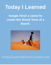 todayilearnedfacts: Follow TodayiLearnedFacts for more Daily Facts! Source : Today I Learned  Google hired a camel to  create the Street View of a  desert.  TodaviLearned Facts.tumblr.com todayilearnedfacts: Follow TodayiLearnedFacts for more Daily Facts! Source