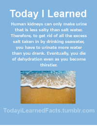 Drinking, Facts, and Being Salty: Today I Learned  Human kidneys can only make urine  that is less salty than salt water.  Therefore, to get rid of all the excess  salt taken in by drinking seawater  you have to urinate more water  than you drank. Eventually, you die  of dehydration even as you become  thirstier  TodaviLearned Facts.tumblr.com todayilearnedfacts: Follow TodayiLearnedFacts for more Daily Facts! Source