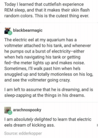 randomizer: Today I learned that cuttlefish experience  REM sleep, and that it makes their skin flash  random colors. This is the cutest thing ever.  blackbearmagic  The electric eel at my aquarium has a  voltmeter attached to his tank, and whenever  he pumps out a burst of electricity-either  when he's navigating his tank or getting  fed-the meter lights up and makes noise.  Sometimes, I'll walk past him when he's  snuggled up and totally motionless on his log,  and see the voltmeter going crazy.  I am left to assume that he is dreaming, and is  sleep-zapping at the things in his dreams.  arachnospooky  I am absolutely delighted to learn that electric  eels dream of kicking ass.  Source: edderkopper