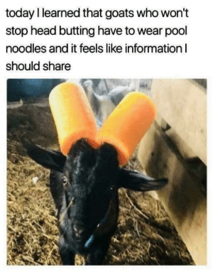 Dank, Head, and Memes: today I learned that goats who won't  stop head butting have to wear pool  noodles and it feels like information I  should share Meirl by specksboi MORE MEMES