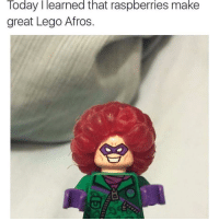Funny, Lego, and Tumblr: Today I learned that raspberries make  great Lego Afros omghotmemes:  Missed childhood via /r/funny https://ift.tt/2meN6zA