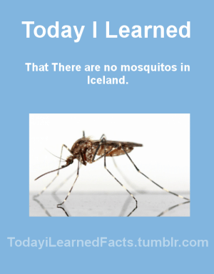 Facts, Tumblr, and Blog: Today I Learned  That There are no mosquitos in  Iceland.  TodaviLearned Facts.tumblr.com todayilearnedfacts: Source Follow TodayiLearnedFacts for more Daily Facts!
