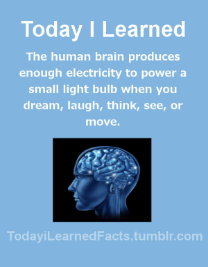 Facts, Tumblr, and Blog: Today I Learned  The human brain produces  enough electricity to power a  small light bulb when you  dream, laugh, think, see, or  move  TodaviLearned Facts.tumblr.com todayilearnedfacts: Follow TodayiLearnedFacts for more Daily Facts! Source