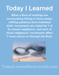 Animals, Facts, and Tumblr: Today I Learned  When a flock of starlings are  murmurating (flying in those shape-  shifting patterns) Each individual  birds' movements are copied by 7 of  its closest neighbours, and each of  those neighbours' movements affect  7 more and so on through the flock.  TodaviLearned Facts.tumblr.com todayilearnedfacts: Follow TodayiLearnedFacts for more Daily Facts! Source