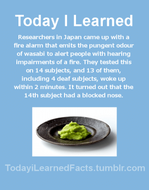 Facts, Fire, and Tumblr: Today ILearned  Researchers in Japan came up with a  fire alarm that emits the pungent odour  of wasabi to alert people with hearing  impairments of a fire. They tested this  on 14 subjects, and 13 of them,  including 4 deaf subjects, woke up  within 2 minutes. It turned out that the  14th subject had a blocked nose  TodayiLearnedFacts.tumblr.com todayilearnedfacts:Follow TodayiLearnedFacts for more Daily Facts!