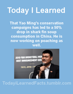 todayilearnedfacts: Source Follow @todayilearnedfacts​ for more daily Facts! : Today ILearned  That Yao Ming's conservation  campaigns has led to a 50%  drop in shark fin soup  consumption in China. He is  now working on poaching as  well  2019 FIBA BASKETBALL WOR  HOST ANNOUNCEMENT CER  TOKYO, JAPAN 1 7  TodayiLearnedFacts.tumblr.com todayilearnedfacts: Source Follow @todayilearnedfacts​ for more daily Facts!