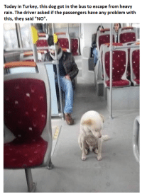 "Rain, Today, and Turkey: Today in Turkey, this dog got in the bus to escape from heavy  rain. The driver asked if the passengers have any problem with  this, they said ""NOo"" This dog was welcomed in the bus in a rainy day in Turkey."