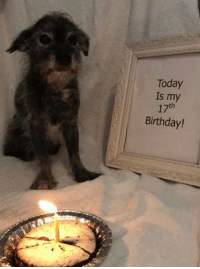 Birthday, Memes, and Today: Today  Is my  17th  Birthday!