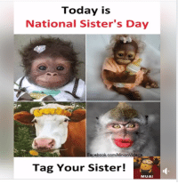 Mean, Today, and Forwardsfromgrandma: Today is  National Sister's Day  OS  Tag Your Sister!  MUA!