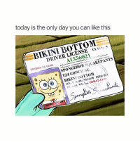 Sex, Bikini Bottom, and Bikini: today is the only day you can like this  BIKINI BOTTOM  DRIVER LICENSE CLASS  A1356021  EXPIRES: 12.11-03  SPONGEBO SQUAREPANTS  BIKINI BOTTOm  124 CONCH ST.  SEX: M AIR: YELLOW EYES: BIU  59 It's his bday ❤