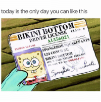 Memes, Sex, and SpongeBob: today is the only day you can like this  BIKINI BOTTOM  DRIVER LICENSE CLASS: S  A1356021  EXPIRES: 12-11-03  SPONGEBOB SQUAREPANTS  124 CONCH ST  SEX:M HAIR: YELLOW EYES: B  1ot 7-14...😂👍 https://t.co/xvfnHMYO0T