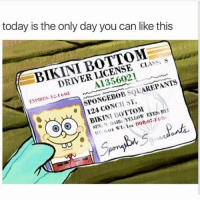 Birthday, Funny, and SpongeBob: today is the only day you can like this  BIKINI BOTTOM  DRIVER LICENSE CIASS: S  A135602  ENPIRES: 12-11-03  SPONGEBOB SQUAREPANTS  24 CONCH ST.  OOBIKINI BOTTOM  KINI1:0ITOM  SEN M HAIRs YELLOW EYES B  , ,EYES: Bu  59 Birthday boiii😂😂