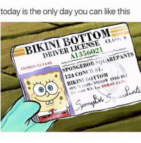 Memes, SpongeBob, and Bikini Bottom: today is the only day you can like this  BIKINI BOTTOM  DRIVER LICENSE CLASS: S  A1356021  ENPIRES:2-1.03  SPONGEBOB SQUAREPANTS  BIKINI BOTTOM  124 CONCH ST.  SEN: M AIR:YELLOW EYESBii  59 DOB 14th of July....
