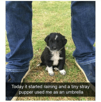 That's a very smart pupper | @cuteandfuzzybunch 🐶: Today it started raining and a tiny stray  pupper used me as an umbrella That's a very smart pupper | @cuteandfuzzybunch 🐶