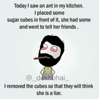 Dekh Bhai, International, and Cube: Today saw an ant in my kitchen.  placed some  sugar cubes in front of it, she had some  and went to tell her friends  bhai  I removed the cubes so that they will think  She is a liar. Bro does nonsense when high 😂😂😂
