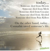 Heroin, Memes, and Cocaine: today  Someone died from Heroin  Someone died from Meth  Someone died from Cocaine  Someone died from Alcohol  Someone died from Pain Killers  On the other hand, today  Cannabis saved someone's life