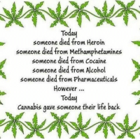 methamphetamine: Today  someone died from Heroin  someone died from Methamphetamines  someone died from cocaine  someone died from Alcohol  someone died from pharmaceuticals  However  Today  Cannabis gave someone their life back